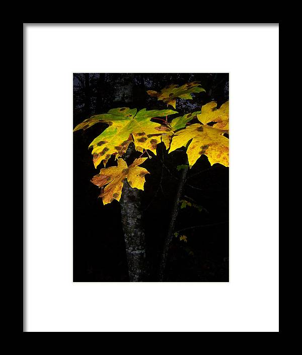Autumn Framed Print featuring the photograph Rings Of Green And Drown by Ken Day