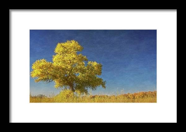 Nature Framed Print featuring the photograph Rio Grande Bosque Blue and Gold, New Mexico by Zayne Diamond Photographic