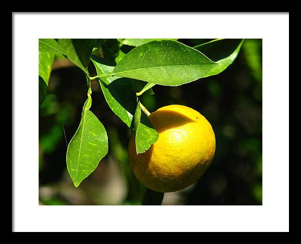 Tree Framed Print featuring the photograph Ripe by Thomas Kelly