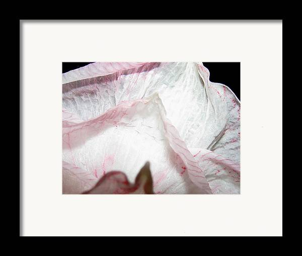 Flower Framed Print featuring the photograph Rising by Belinda Consten