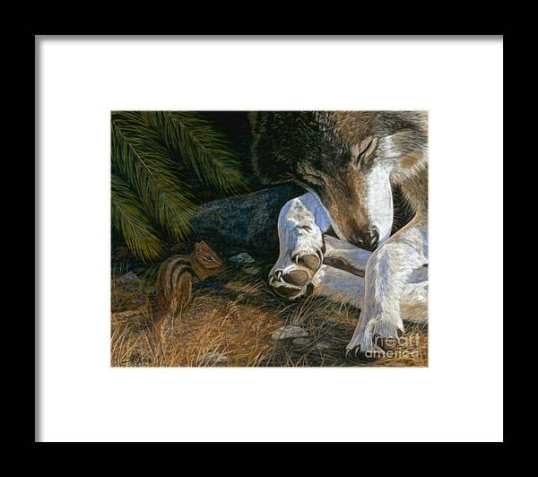Wolf Framed Print featuring the painting Risky Business by Sheri Gordon