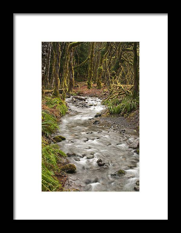 Forest Framed Print featuring the photograph River Forest by Chad Davis