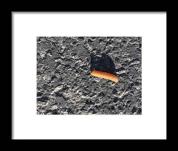Caterpillar Framed Print featuring the photograph Road Caterpillar by Stan Magnan
