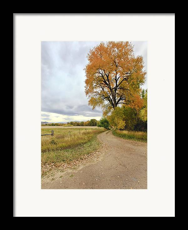 Trees. Fallcolors .big. Tree. Dirt. Road. Long. Road. Yellow. Grass. Cloudy. Storm. Green. Blue. Aspin. Yellow. Aspin Tree Phbgotography. Mixed Media. Mixed Media Photography. Colorado Fall Colors. Mixed Media Fall Colors. Fall Color Greeting Cards. Fort Collins Colorado Fall Colors. Colorado Greeting Cards.  Framed Print featuring the photograph Road To Dads Place by James Steele