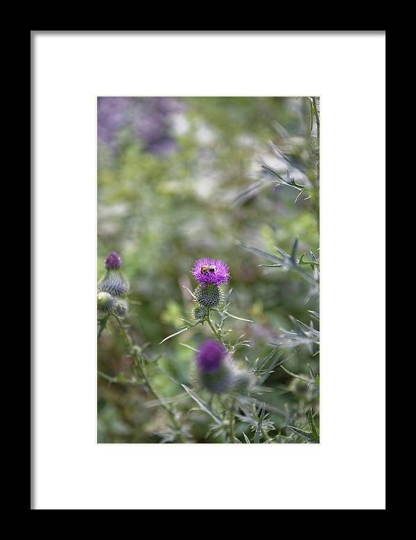 Autumn Framed Print featuring the photograph Roadside Thistle Bee Polination by Adrian Bud