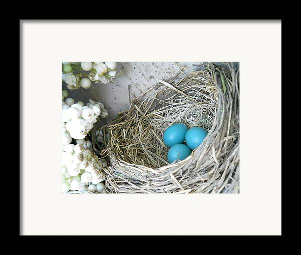 Nature Framed Print featuring the photograph Robin Eggs In A Wreath by Marqueta Graham