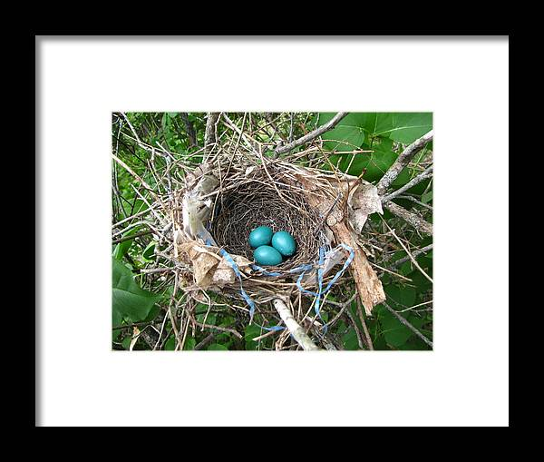 Robin Framed Print featuring the photograph Robin Eggs by Melissa Parks