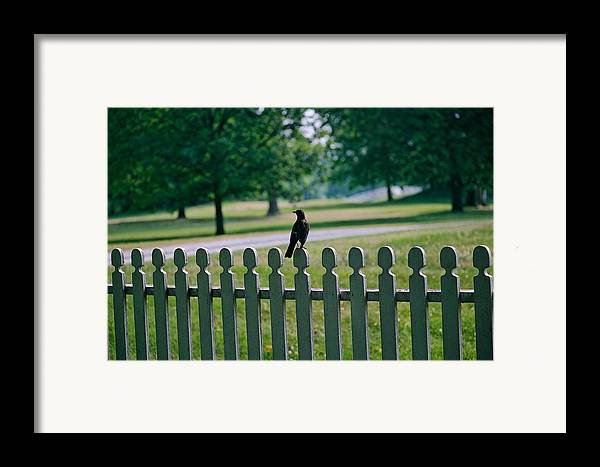 Bird Framed Print featuring the photograph Robin On A Fence by Lone Dakota Photography