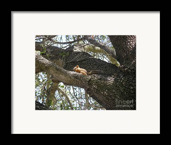 Nature Framed Print featuring the photograph Rock-a-bye Baby... by Lucyna A M Green