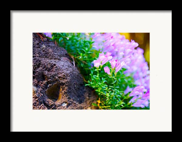 Floral Framed Print featuring the photograph Rock And Flowers by Paul Kloschinsky