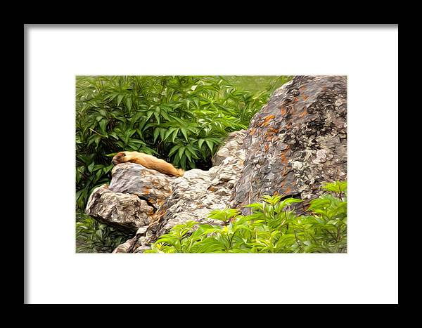 Alpine Framed Print featuring the photograph Rock Chuck by Lana Trussell