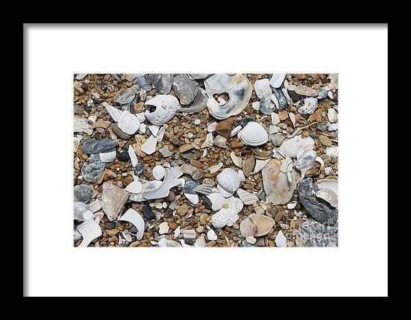 Beach Framed Print featuring the photograph Rock N Shells by Marcie Daniels