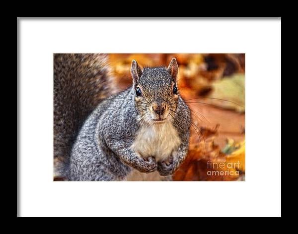 Animal Framed Print featuring the photograph Rocky by Anna Sheradon