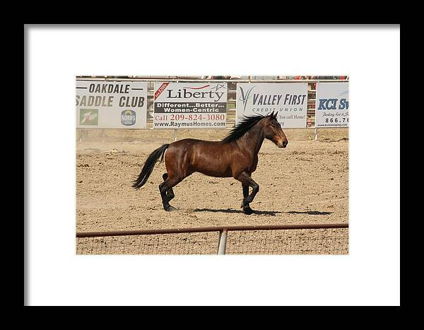 Horse Framed Print featuring the photograph Rodeo by Lea Cypert
