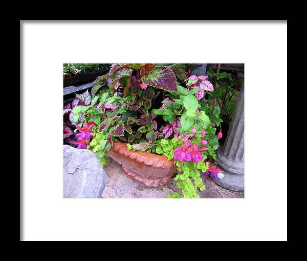 Framed Print featuring the digital art Roger's Gardens Begonia by Steve Brown
