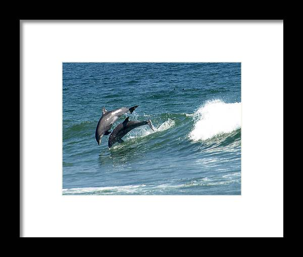 Dolphins Framed Print featuring the painting Rolling Wave by Kim