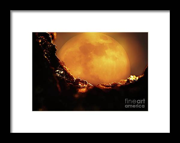 Background Framed Print featuring the photograph Romantic Ant by Andrew Chernenco