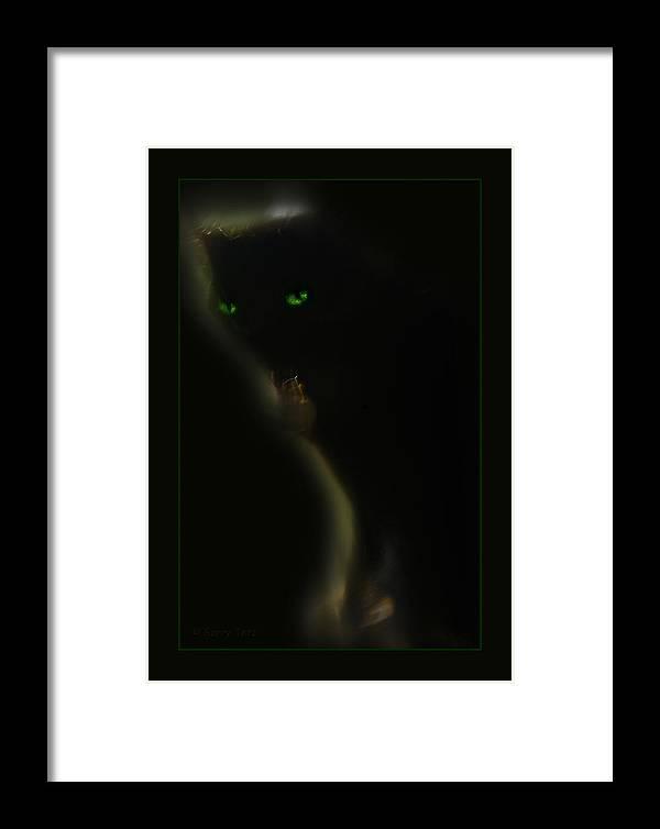 Cat Feline Framed Print featuring the photograph Romeo 2 by Gerry Tetz