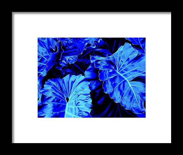 Blue Framed Print featuring the photograph Romney Blue by Ian MacDonald