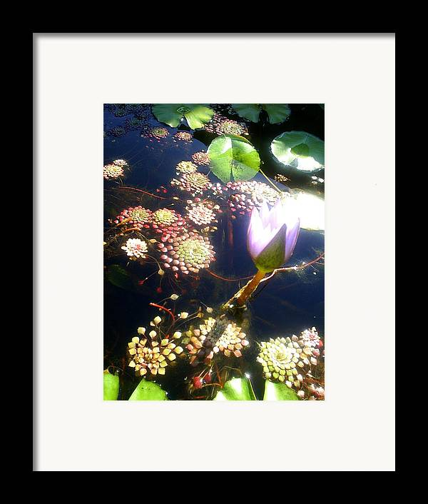 Flowers Framed Print featuring the photograph Root Of Beauty by Scarlett Royal