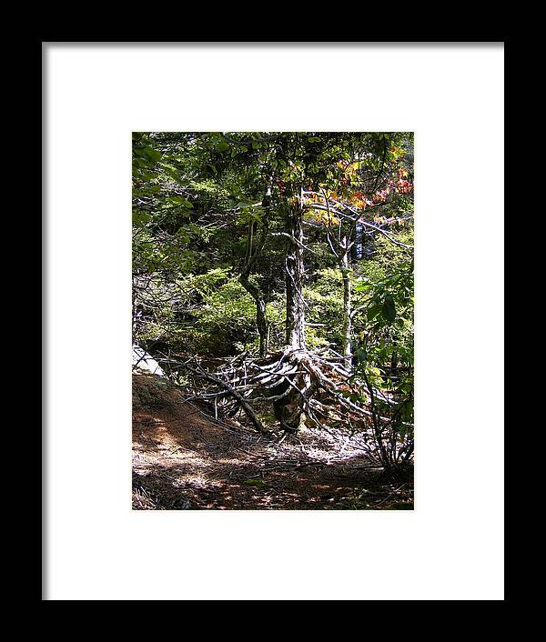 Tree Framed Print featuring the photograph Roots by Alison Heckard