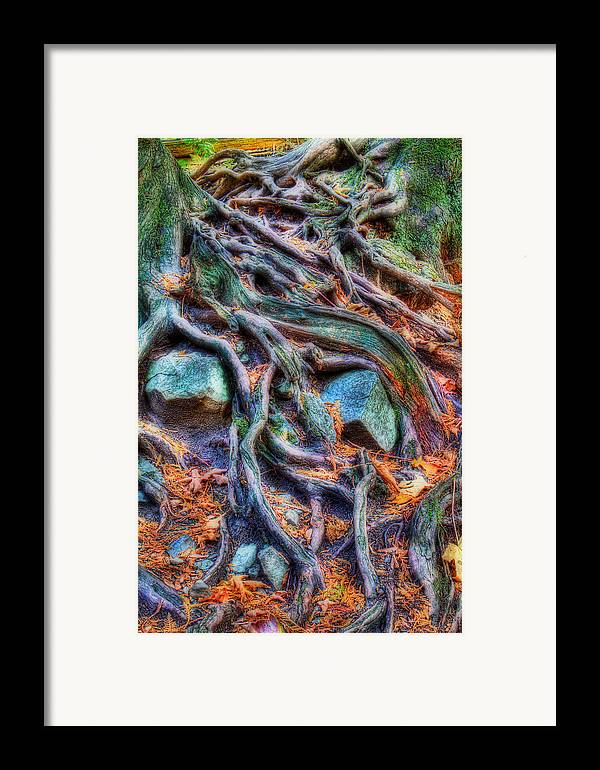 Tree Roots Framed Print featuring the photograph Roots And Rocks by Naman Imagery