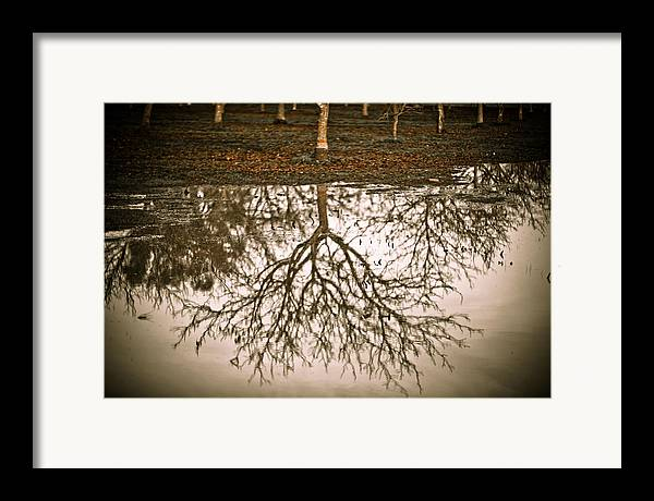 Nature Framed Print featuring the photograph Roots by Derek Selander
