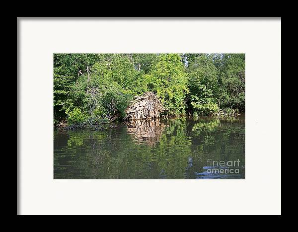 Tree Roots Framed Print featuring the photograph Roots In The Stream by Deborah MacQuarrie-Haig