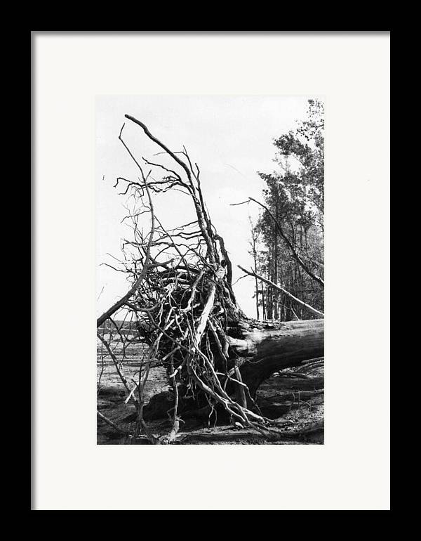 Storm Framed Print featuring the photograph Roots by Steven Crown