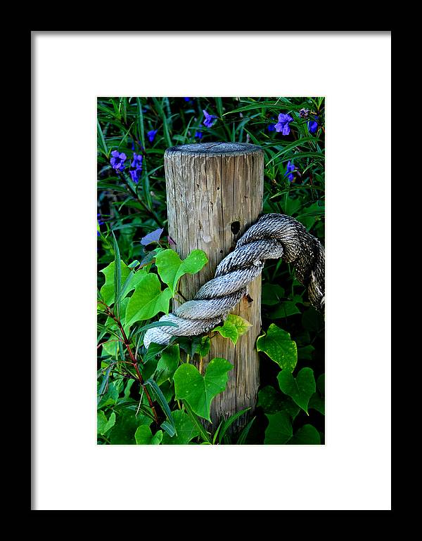 Rope Framed Print featuring the photograph Rope And Vine by Lyle Huisken