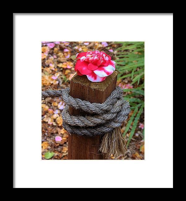 Rope Pillar And Camellia Framed Print featuring the photograph Rope Pillar And Camellia by Viktor Savchenko