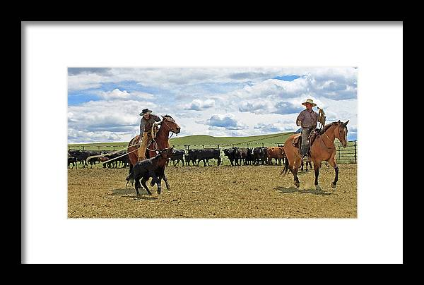 Cowboy Framed Print featuring the photograph Roping In The Branding Pen by Linda Richardson