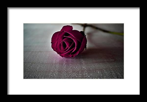 Rose Framed Print featuring the photograph Rose #003 by Ninie AG