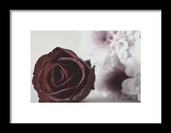 Rose Framed Print featuring the photograph Rose #005 by Ninie AG