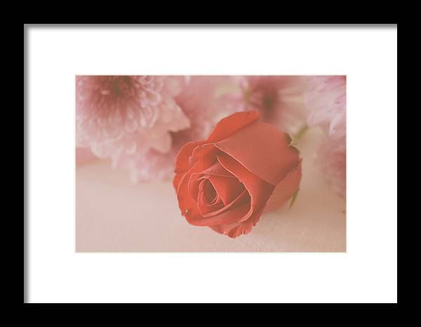 Rose Framed Print featuring the photograph Rose #007 by Ninie AG