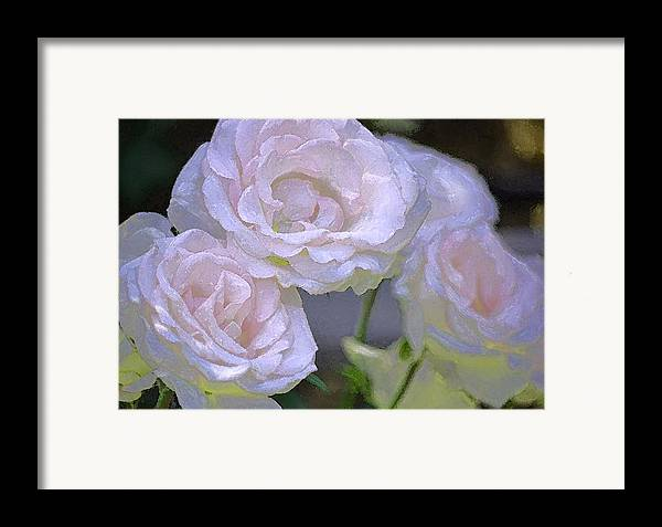 Floral Framed Print featuring the photograph Rose 120 by Pamela Cooper