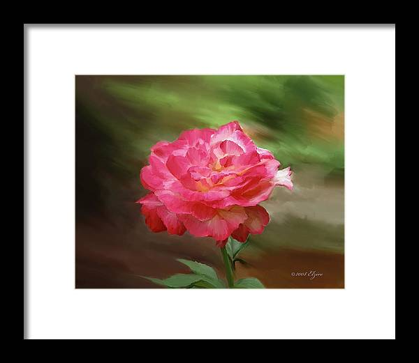 Rose Framed Print featuring the painting Rose Alone by Elzire S