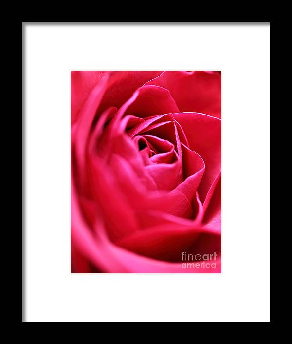 Rose Framed Print featuring the photograph Rose by Amanda Barcon