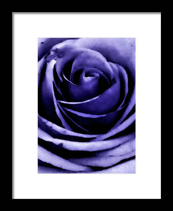 Rose Framed Print featuring the photograph Rose by Candice Wright