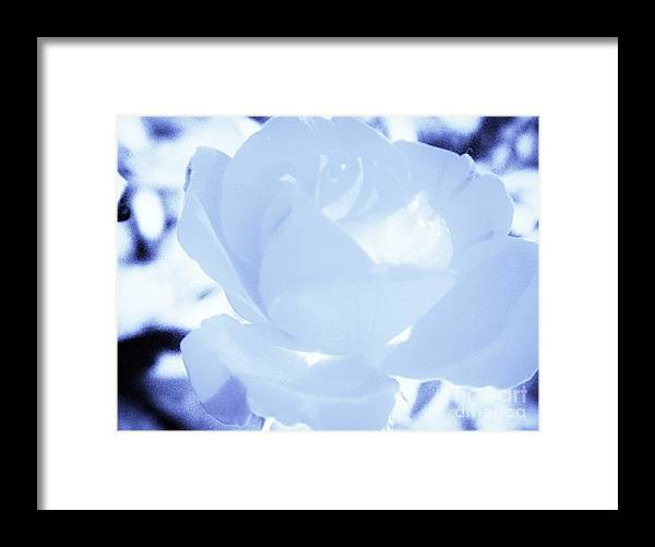 White Framed Print featuring the photograph Rose In Light Blue And White by Debra Lynch