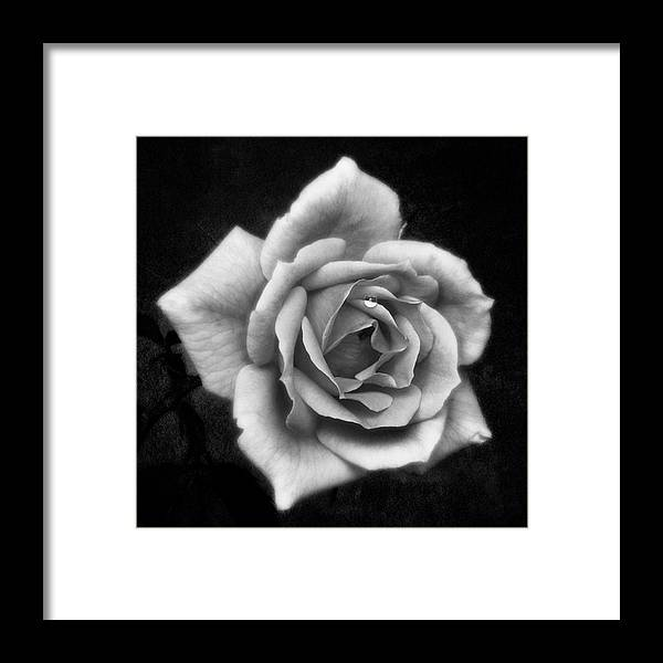 Beautiful Framed Print featuring the photograph Rose In Mono. #flower #flowers by John Edwards