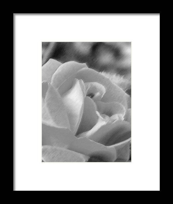 Flower Framed Print featuring the photograph Rose by John Bradburn