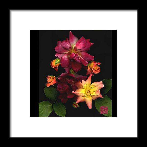 Flower Framed Print featuring the photograph Rose by Lloyd Liebes