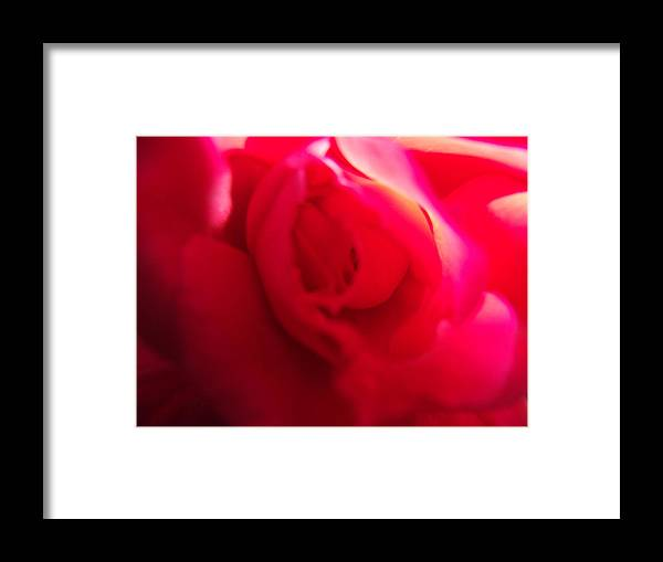 Red Framed Print featuring the photograph Rose Swirl by Nicole I Hamilton