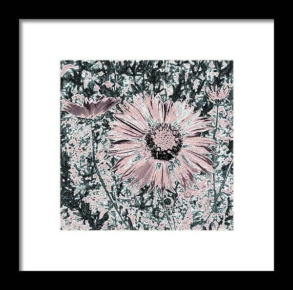 Daisies Framed Print featuring the digital art Rose Wine Daisies by Will Borden