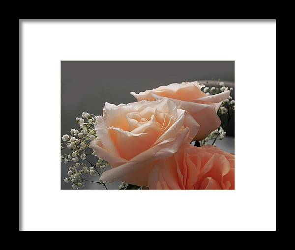 Roses Framed Print featuring the photograph Roses Light by Francesa Miller