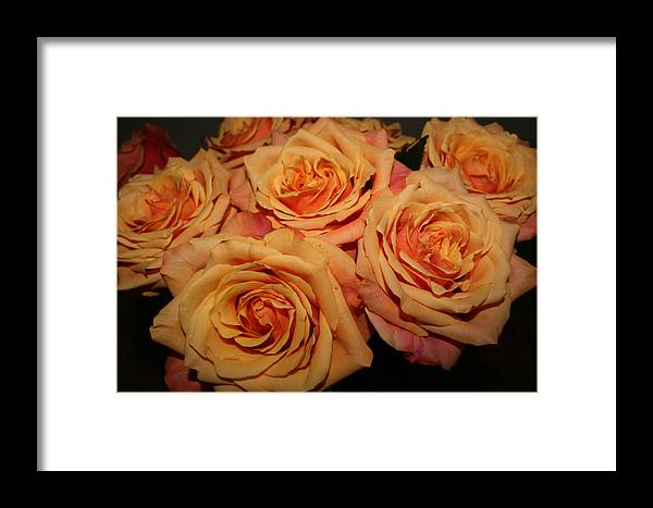 Rose Framed Print featuring the photograph Roses by Linda Hardin