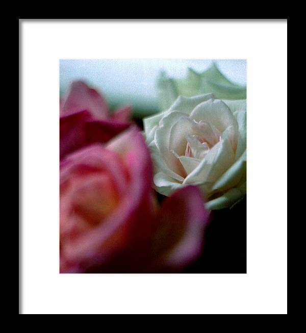 Flowers Framed Print featuring the photograph Roses by Michael Morrison