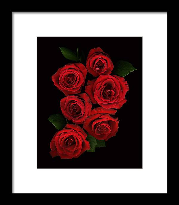 Romance Framed Print featuring the photograph Roses Of Love by Deborah J Humphries