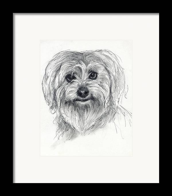 Dog Framed Print featuring the drawing Rosie by Tim Thorpe